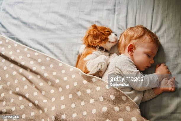 baby and his puppy sleeping peacefully - animal foto e immagini stock