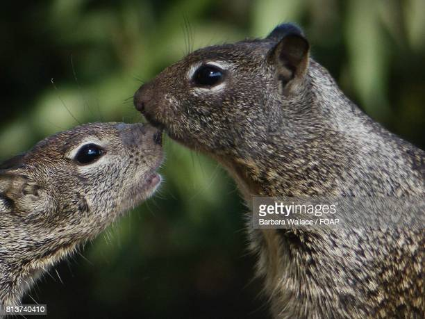 Baby and mother squirrels