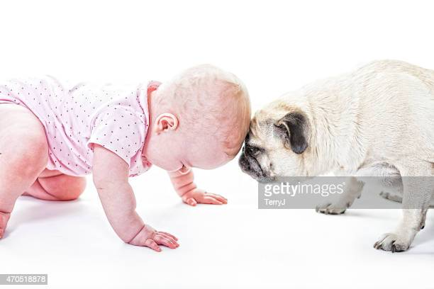 Bebê e Pug Butt Heads