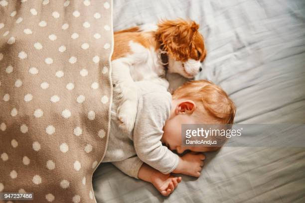 baby and the puppy enjoying their nap together - spaniel stock photos and pictures