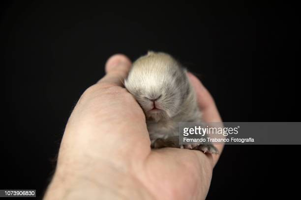 Baby animal in owner's hand