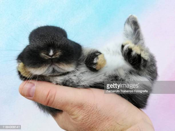 baby animal in owner's hand - tame stock pictures, royalty-free photos & images