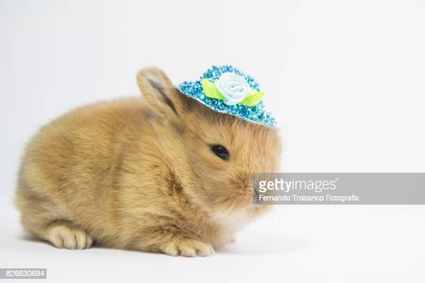 Baby animal with hat