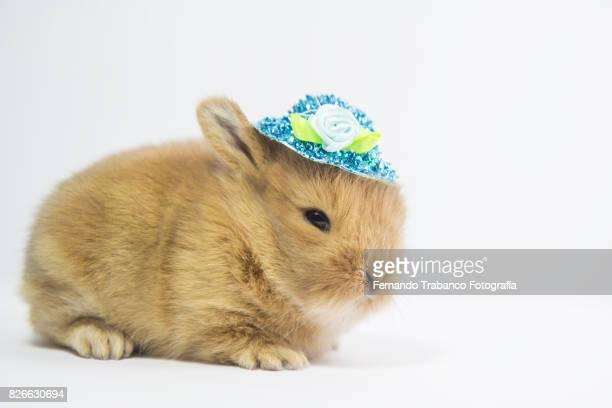 baby animal with hat - coniglietto foto e immagini stock