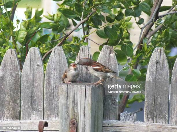 baby bird feeding time - noreen braman stock pictures, royalty-free photos & images