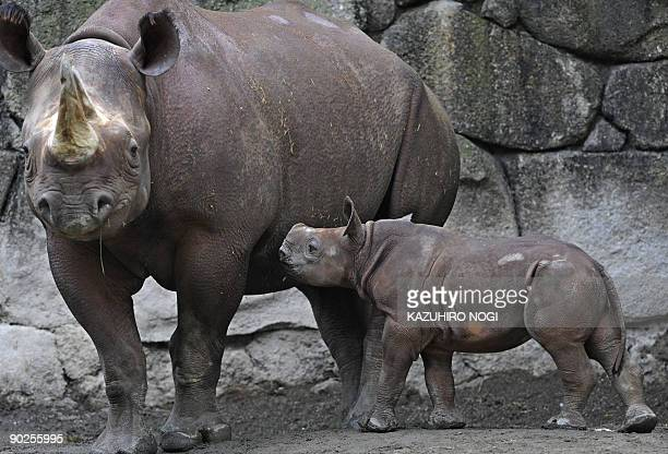 A baby Black Rhinoceros walks suckles its mother in an enclosure at Tokyo's Ueno Zoo on June 12 2009 A baby Black Rhinoceros was born in captivity on...
