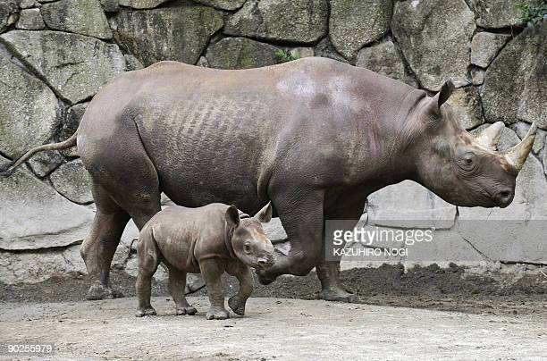A baby Black Rhinoceros walks with its mother in an enclosure at Tokyo's Ueno Zoo on June 12 2009 A baby Black Rhinoceros was born in captivity on...