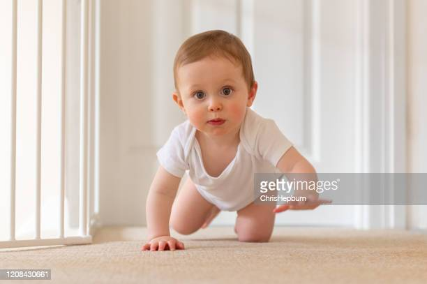 baby boy 9 months old crawling on floor - one baby boy only stock pictures, royalty-free photos & images