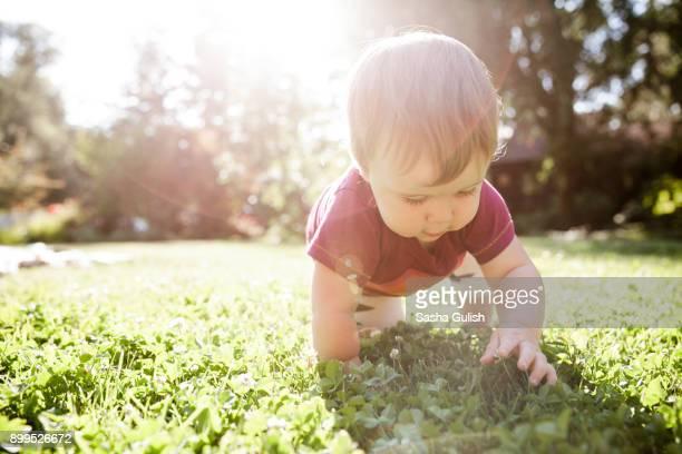 baby boy crawling on grass - de quatro imagens e fotografias de stock