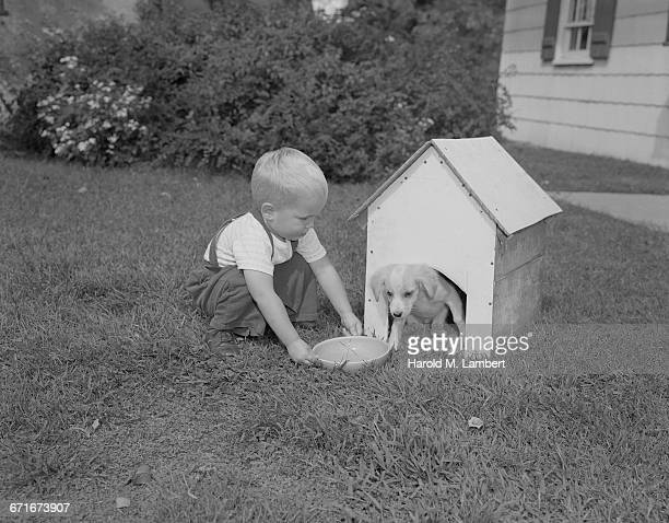 baby boy giving food to puppy - mamífero con garras fotografías e imágenes de stock