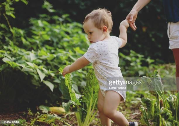 baby boy in his first steps - piernas bonitas de mujer fotografías e imágenes de stock