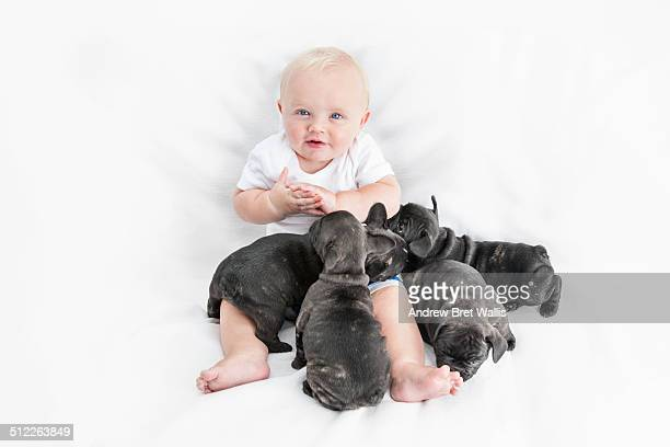 Baby boy plays with French bulldog puppies