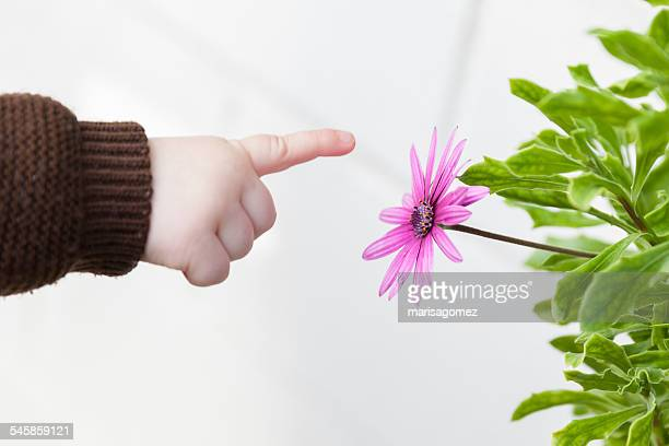 Baby boy pointing at flower