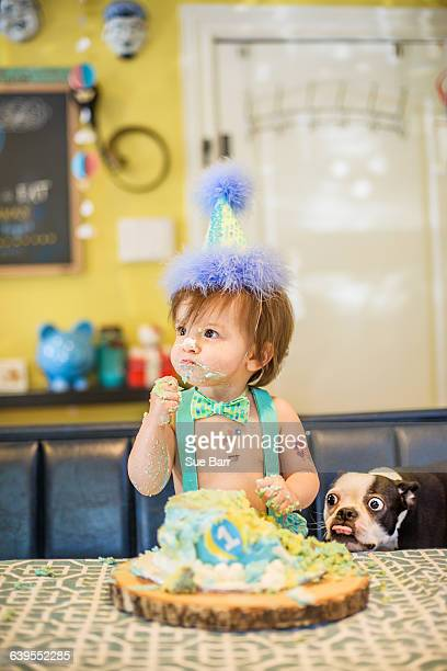 Baby boys pet dog staring at messy birthday cake on table