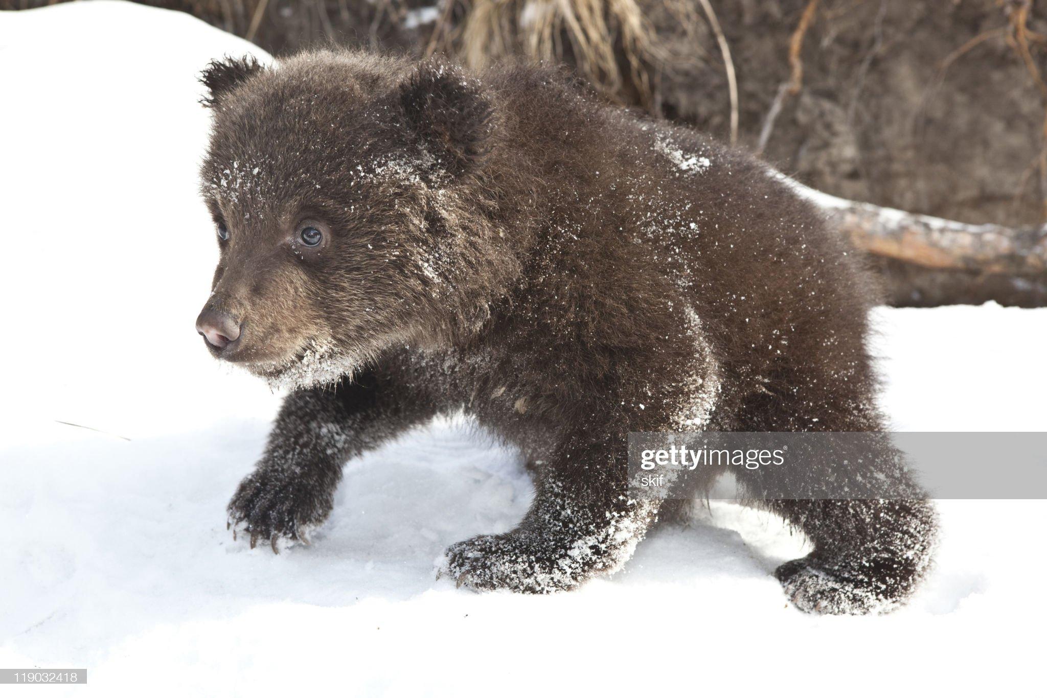 Orso bambino : Foto stock