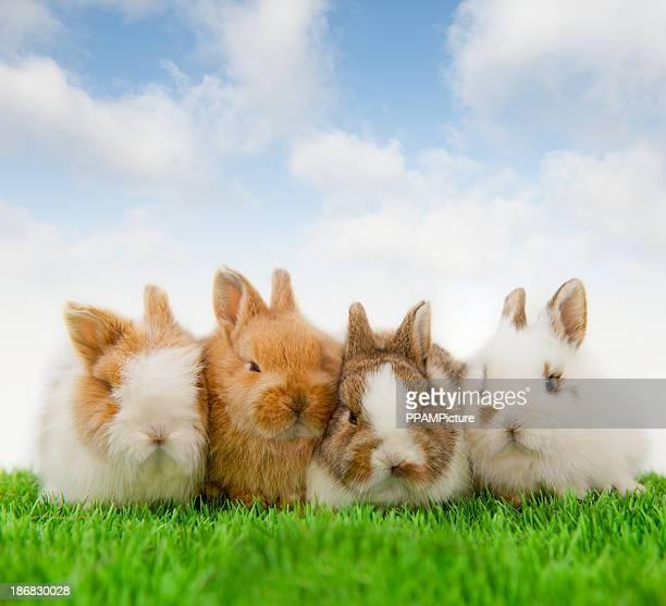 4 Baby bunnies