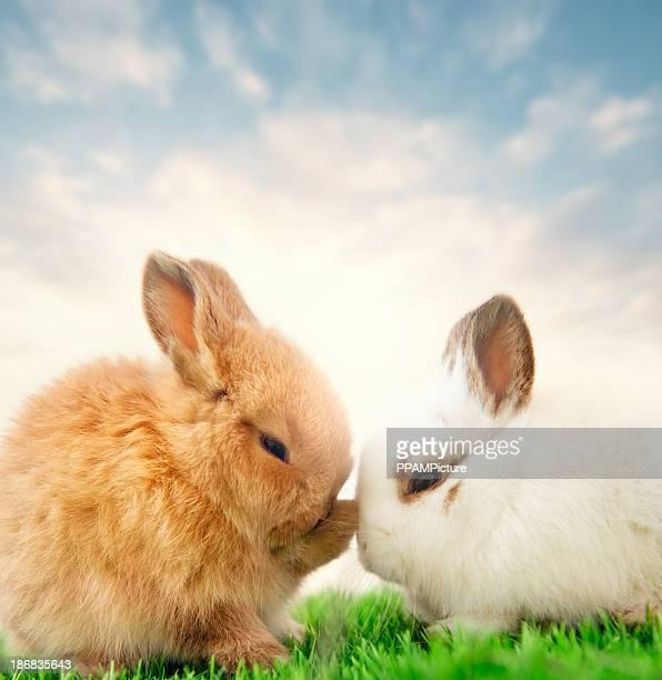 Bebé de conejos