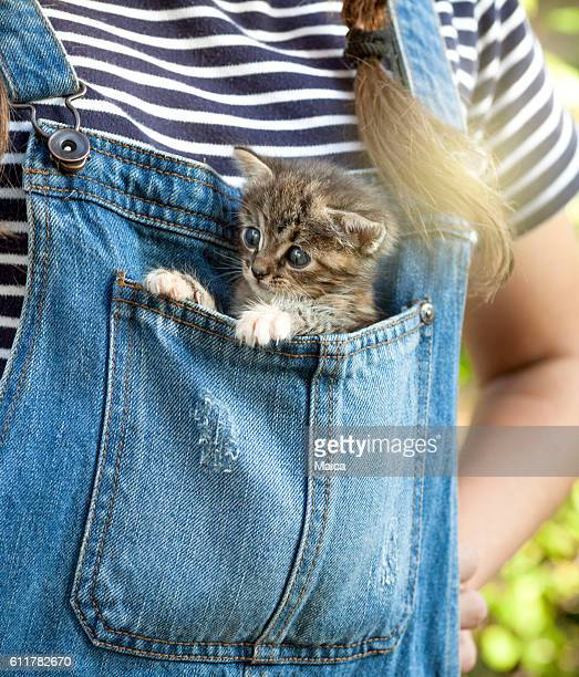 baby cat inside blue jeans pocket - gattini appena nati foto e immagini stock