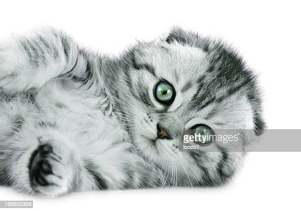 baby cat - loops7 stock photos and pictures