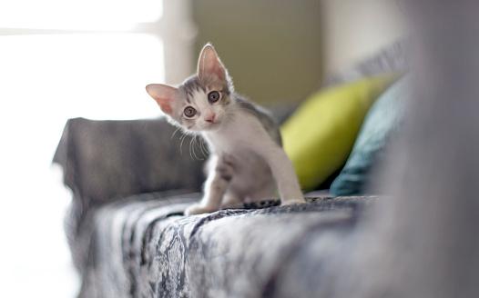 baby cat 637110224