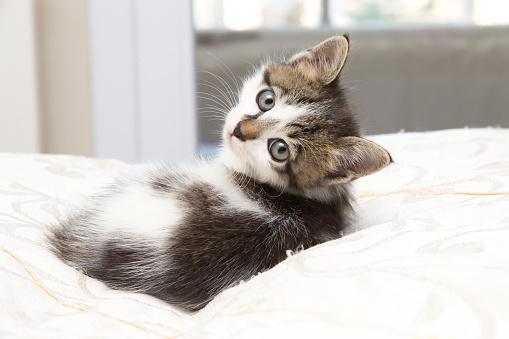 Baby cat 894279094