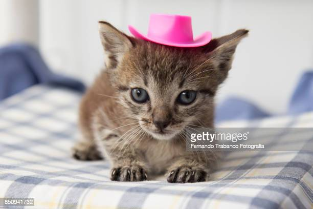 Baby cat with hat