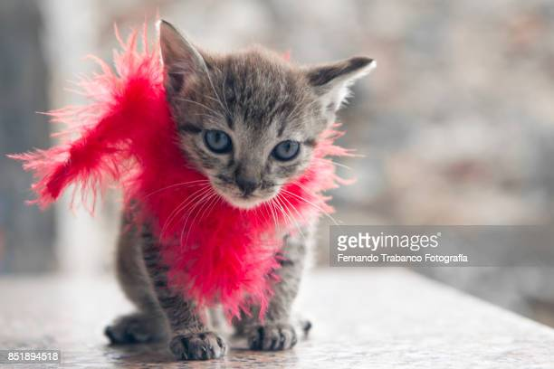 Baby cat with red scarf around his neck