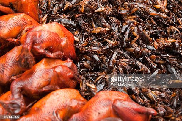 Baby chickens and fried crickets in Cambodia