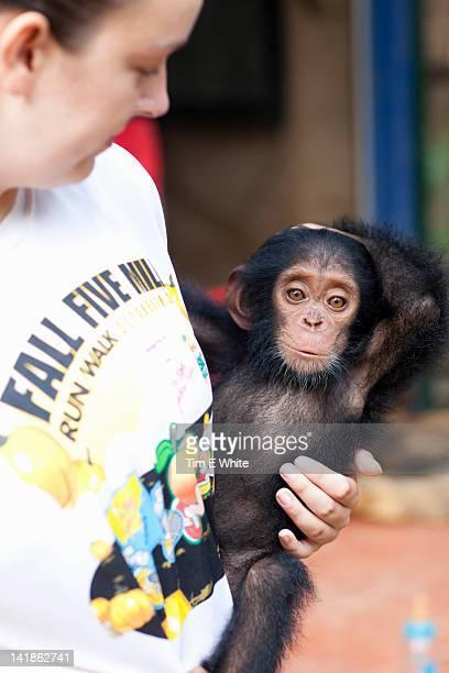 Baby Chimpanzee, Primate sanctuary, Mefou National Park, near Yaounde, Cameroon, Africa