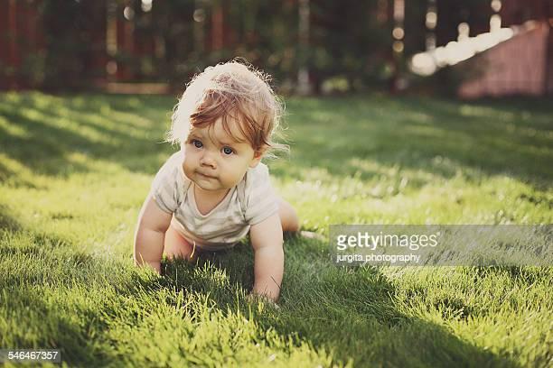 baby crawling on the grass - de quatro imagens e fotografias de stock