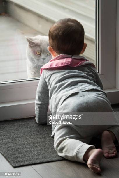 baby crawls in front of patio door looking at british shorthair cat on the other side - british shorthair cat stock pictures, royalty-free photos & images