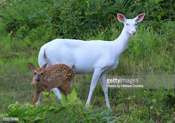 Baby deer with mother deer in forest