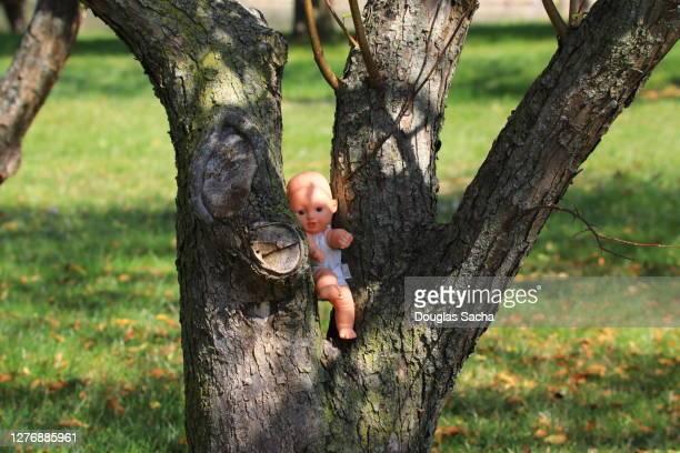 baby doll toy stuck in a tree - ベビードールワンピース ストックフォトと画像