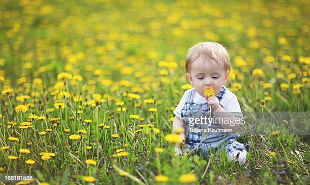 Baby eating dandelion