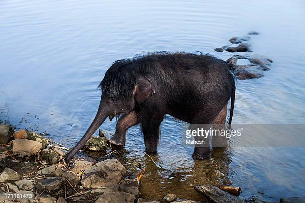 baby eephant after bath - kerala elephants stock pictures, royalty-free photos & images