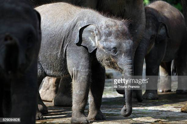 4 383 Hotel Zoo Photos And Premium High Res Pictures Getty Images