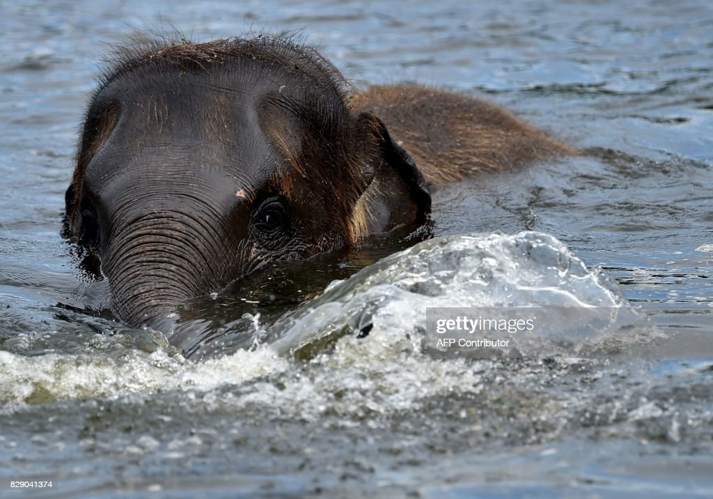 Baby elephant Edgar splashes around in a pool of his enclosure at the Tierpark zoo in Berlin on August 10, 2017. / AFP PHOTO / dpa / Britta Pedersen / Germany OUT