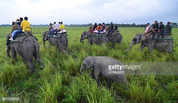 A baby elephant follows its mother as tourists go on an elephant safari on the opening day of the Kaziranga National Park in Bokakhat district of...
