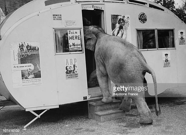 Baby Elephant In A Mobile Arp Office In England On November 1938