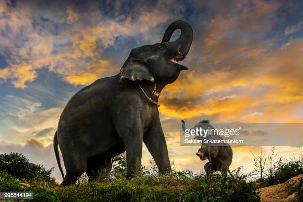 baby elephant wants to play - big bums stock pictures, royalty-free photos & images
