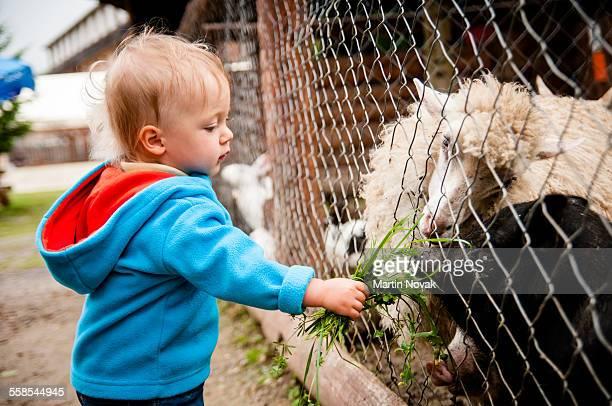 Baby feeding farm animals