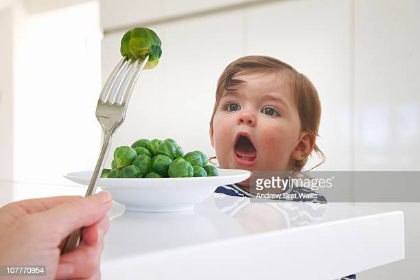 baby girl anticipating bite of brussel sprouts - fork stock pictures, royalty-free photos & images