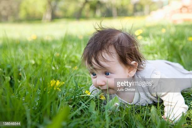 a baby girl crawling in the grass - de quatro imagens e fotografias de stock