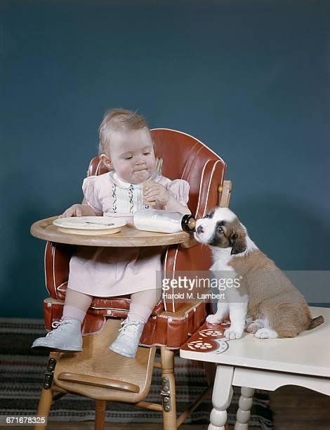 baby girl having food with puppy  - mamífero con garras fotografías e imágenes de stock