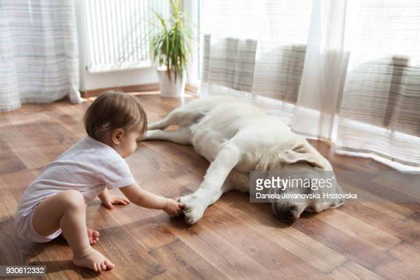 baby girl playing with dog - flooring stock photos and pictures