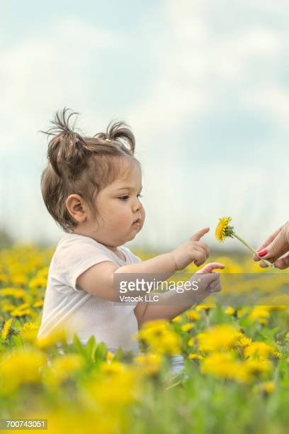baby girl (6-11 months) standing in meadow with dandelions - 6 11 months stock pictures, royalty-free photos & images