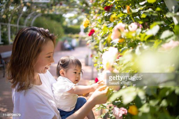 baby girl touching rose in public park - chiba prefecture stock pictures, royalty-free photos & images