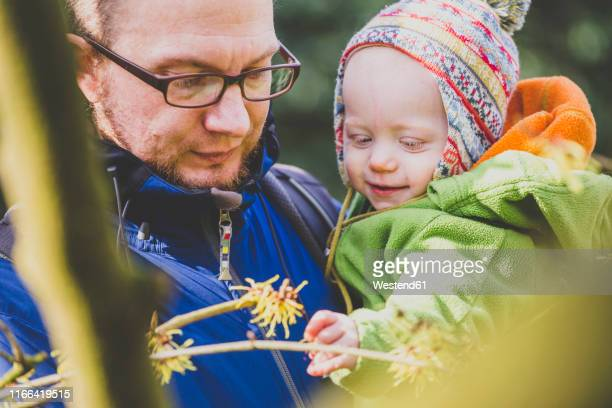 baby girl watching witch hazel on father's arms - hazel bond stock photos and pictures