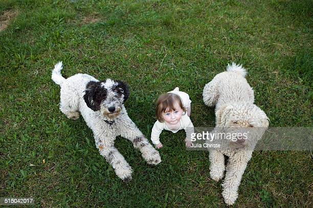 baby girl with portuguese water dogs lying on grass - vida de bebé fotografías e imágenes de stock
