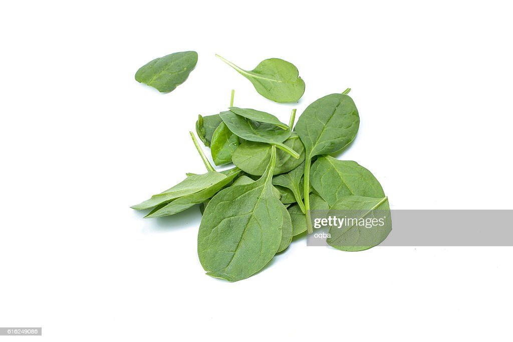 Baby green spinach : Foto de stock